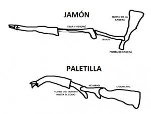 jamón y paletilla