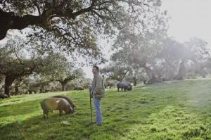 Piara de cerdos al aire libre Carrasco