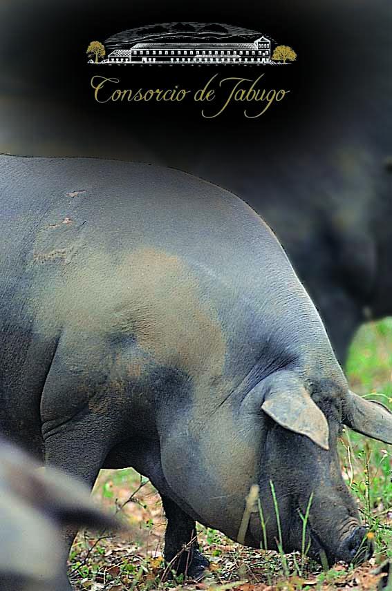 cerdo iberico jabugo